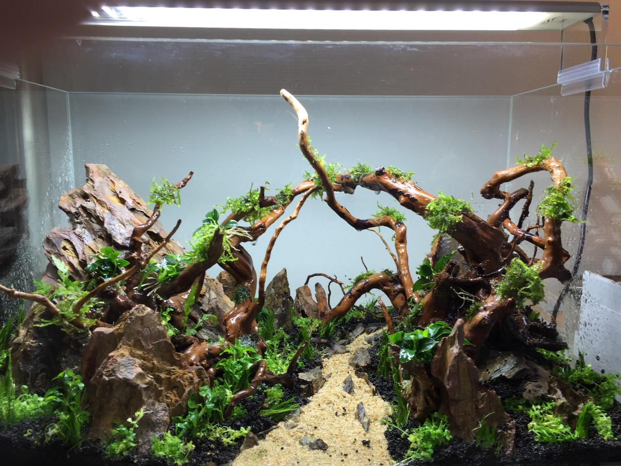attraper crevettes aquarium